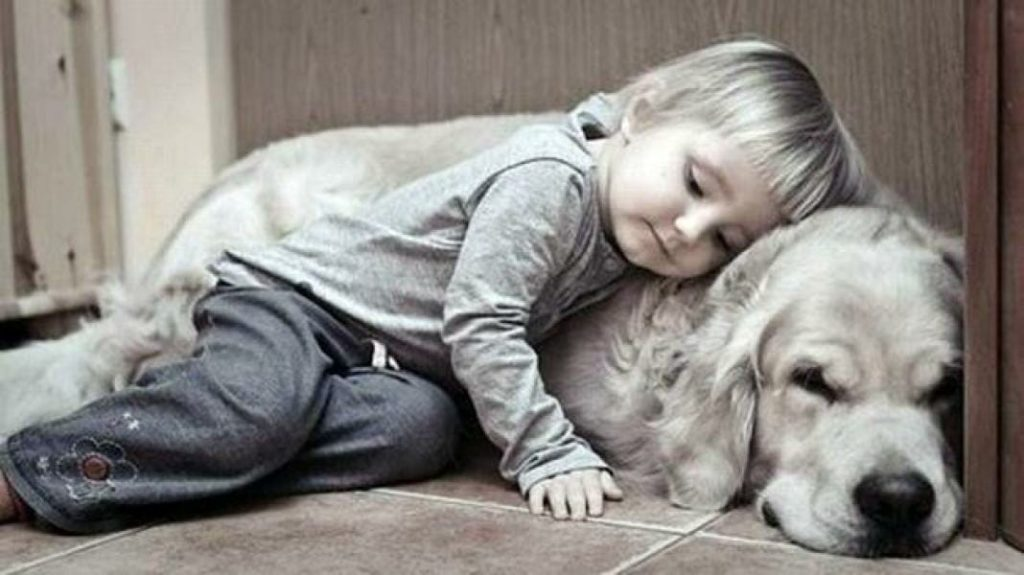 Kids and Pets: clean house for pets