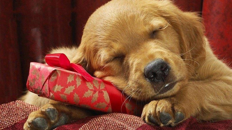 Gift a Puppy