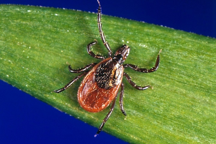 Essential Pest Control Tips