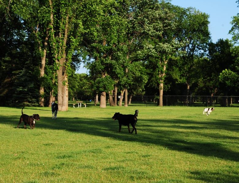 The best dog parks