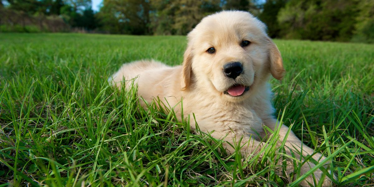 100+ Best Unique Dog Names for Boy & Girl Dogs