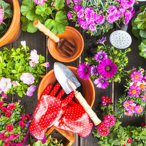 Cleaning up the spring yard - garden