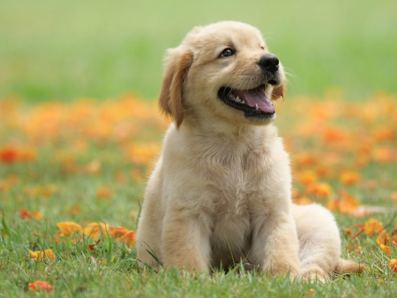 The 25 Cutest Dog Breeds