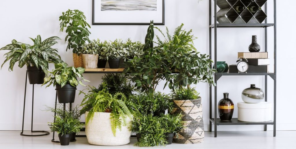 10 Best Aesthetic Plants