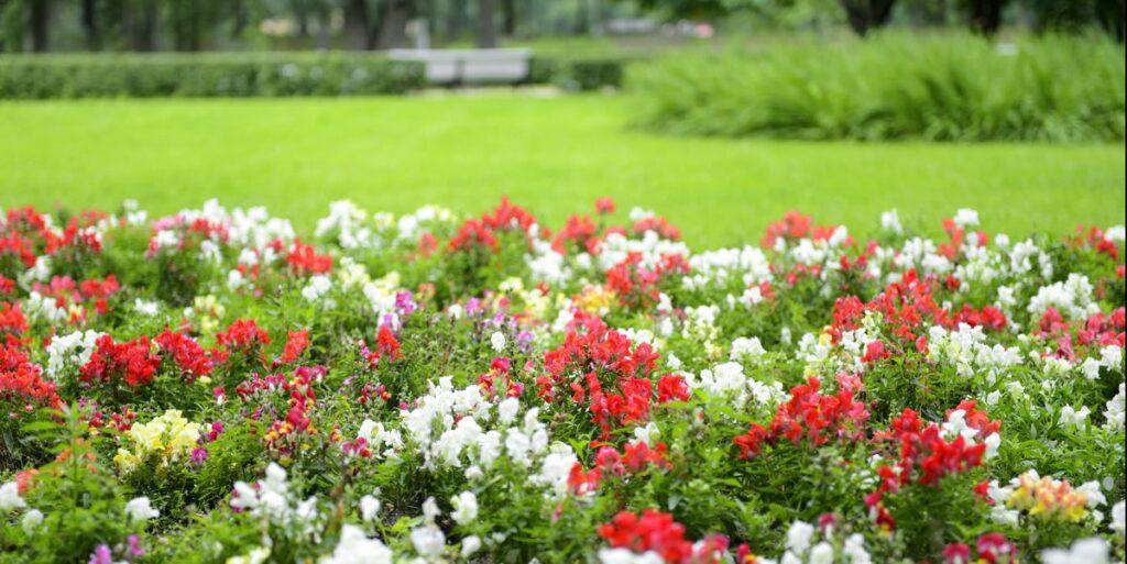 14 Easiest Flowers to Grow
