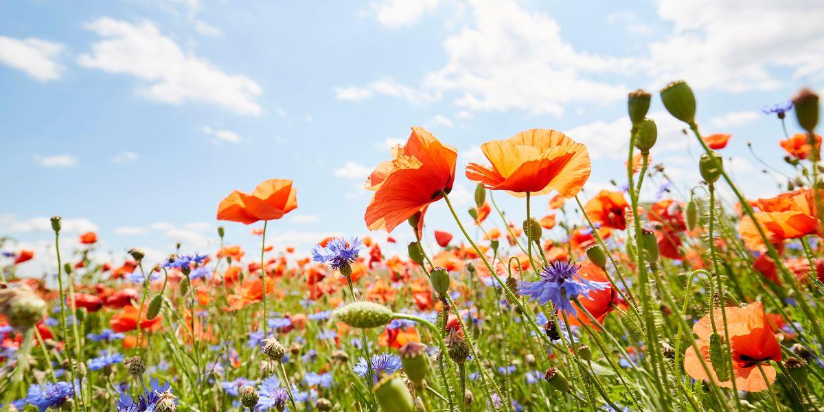 38 Best Summer Flowers – Beautiful Flowers That Bloom All Summer