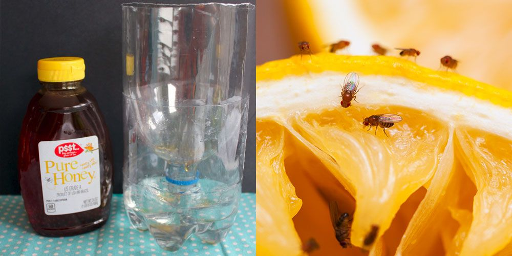 Best Homemade Fly Trap – How to DIY a Fly Trap for Indoors or Outdoors