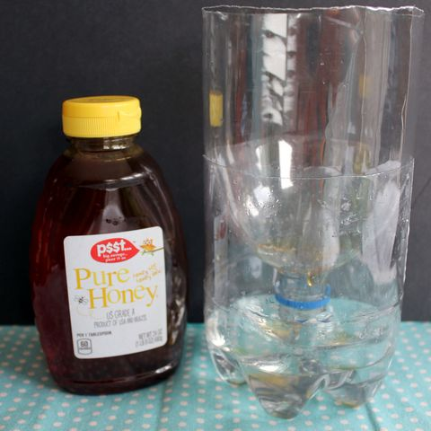 homemade fly trap with bottle and honey
