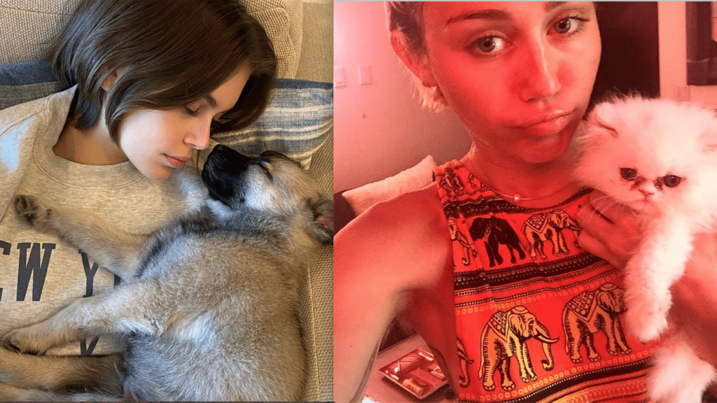 Beyond Choupette. The celeb pets to know now