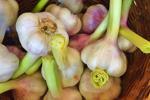 just above the view of fresh garlic in the wicker basket