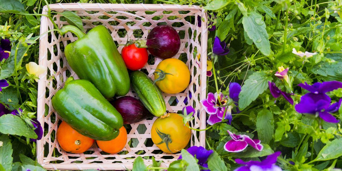 Vegetable Gardening for Beginners – Small Vegetable Garden Ideas