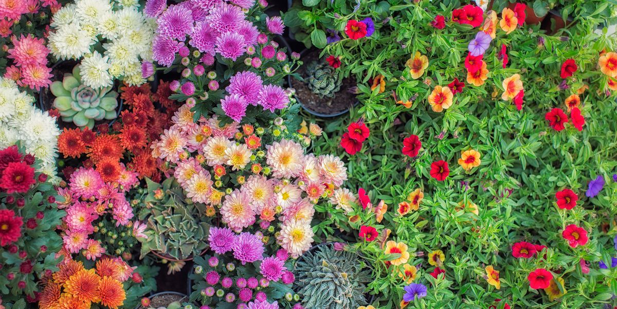 30 Best Fall Flowers for an Autumn Garden