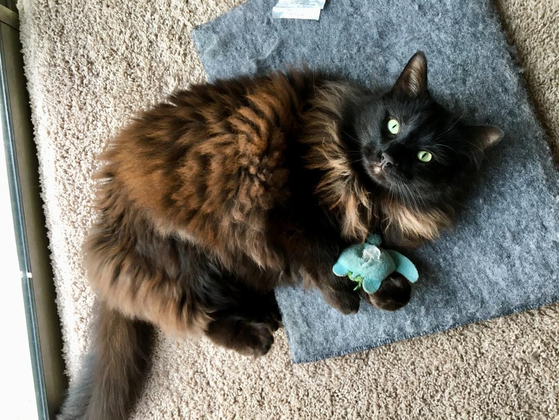 Answering the top 5 questions about catnip