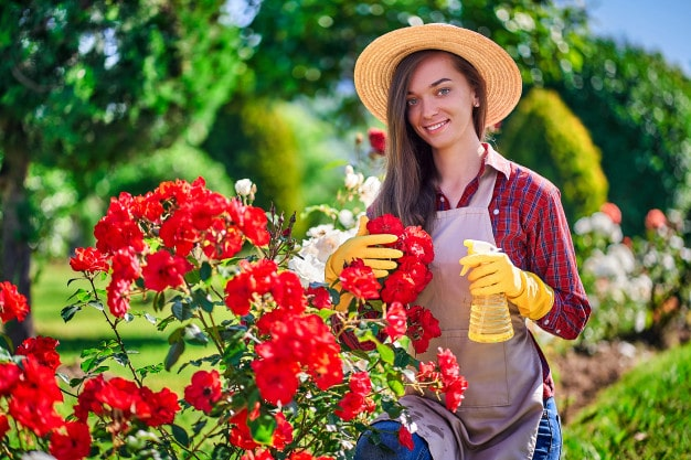 Bottle Gardening or Terrarium