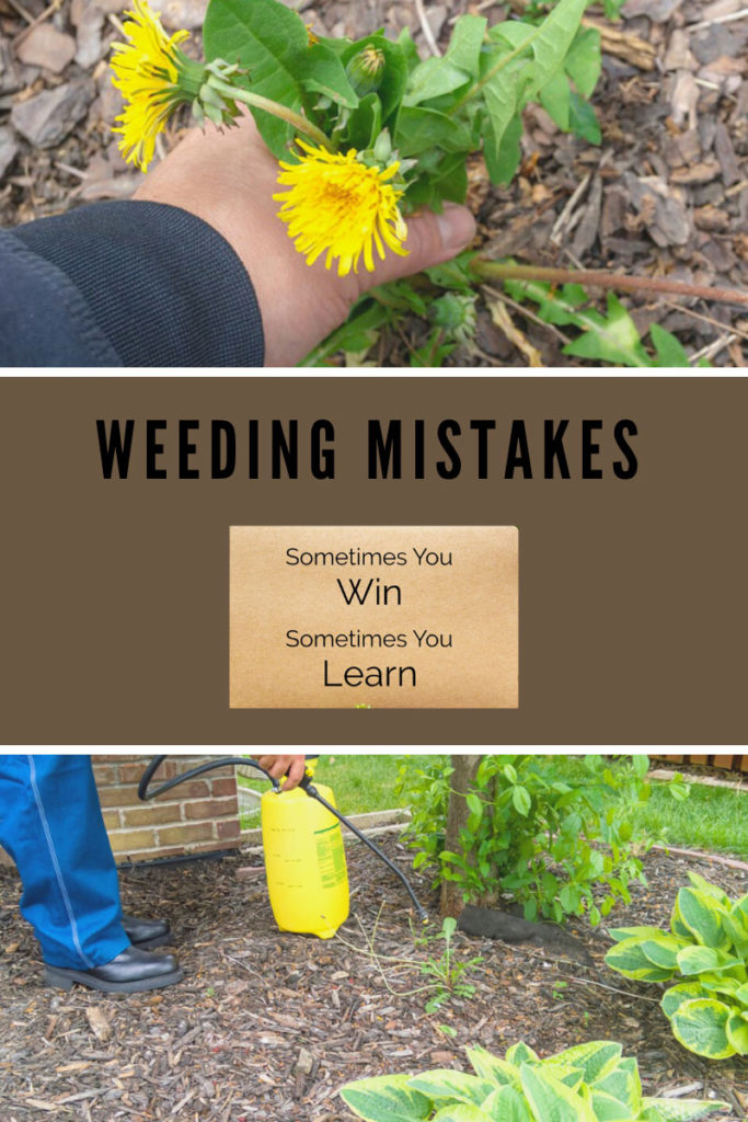 Common Mistakes With Weed Control