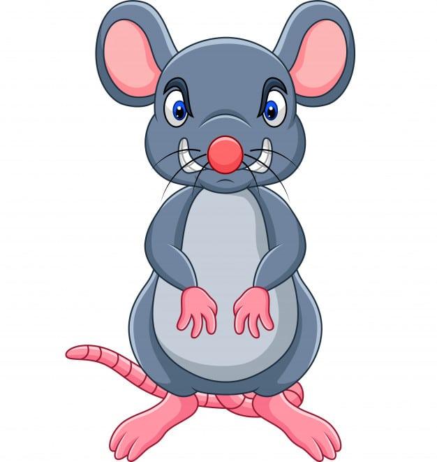 Cure an Aggressive Pet Rat