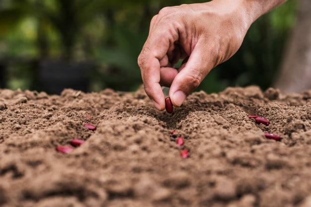 Gardening Tips for Spring Preparation