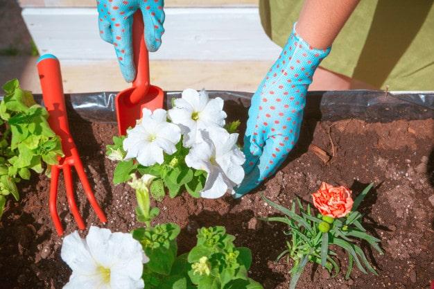 Home Organic Gardening