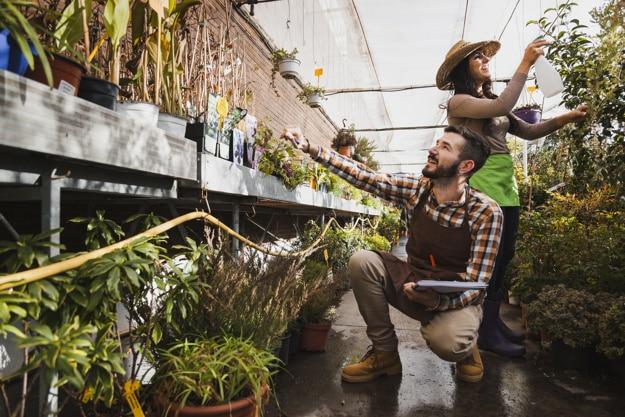 Indoor Gardening Tips For Healthy Plants