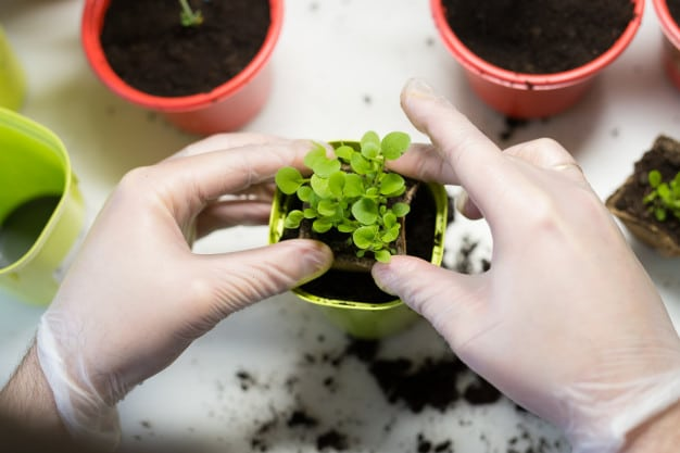 Organic Gardening In Containers