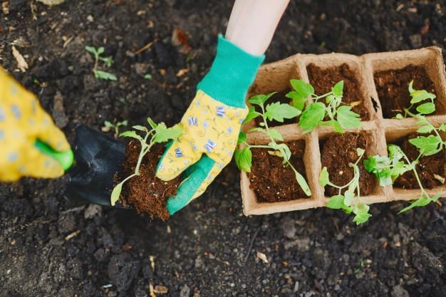 Planting for Organic Gardening