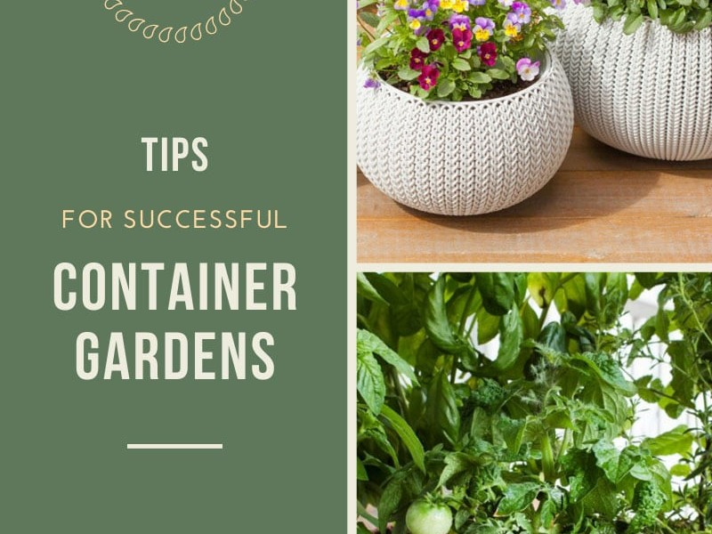 Successful Container Gardening Tricks