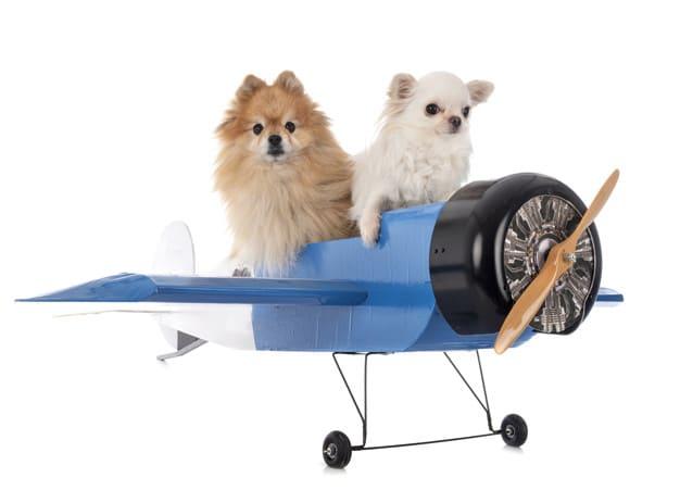 Summer Airline Pet Embargoes