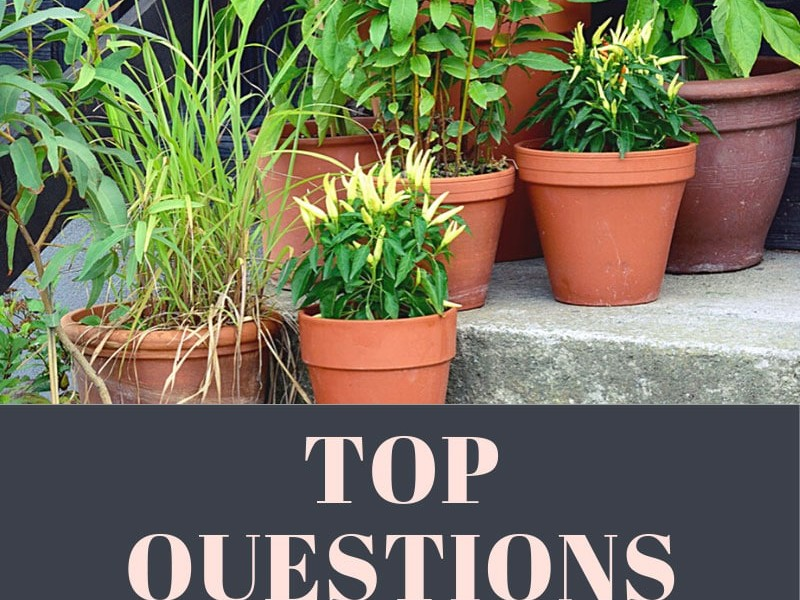 Questions About Container Gardening