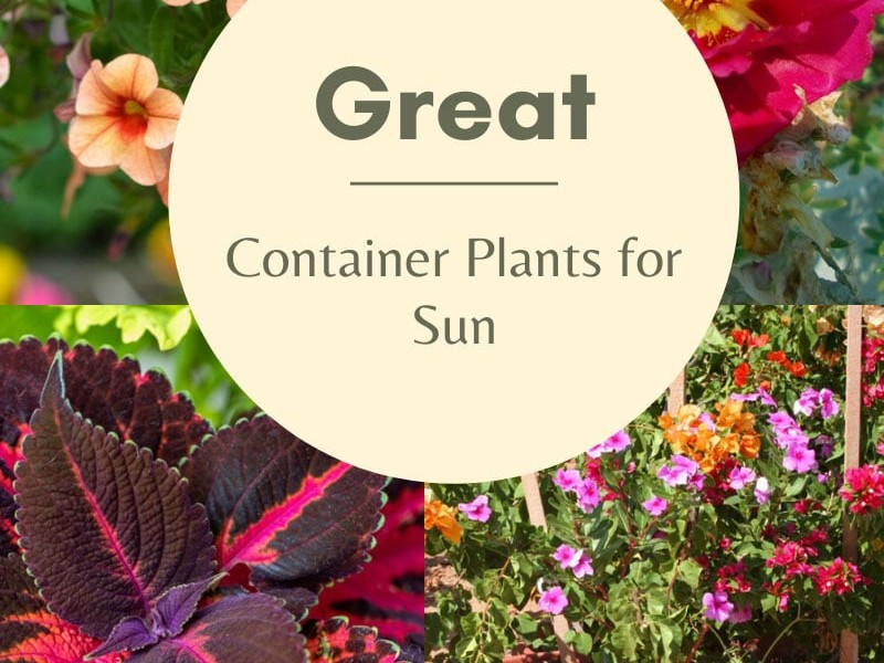 Planting A Full Sun Container Garden