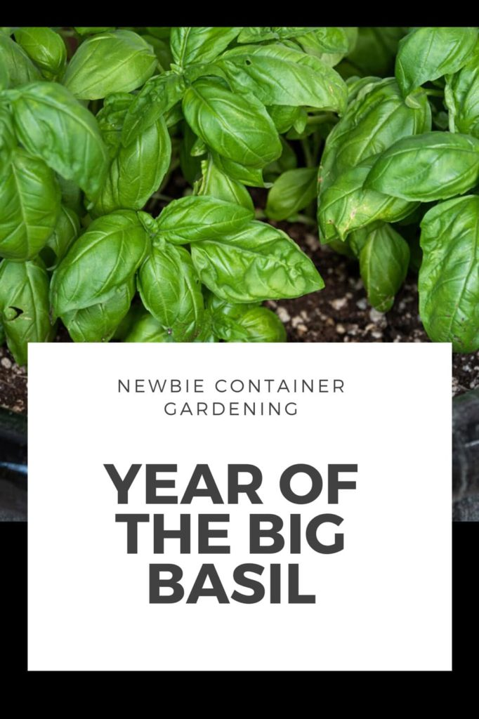 Container Growing Basil