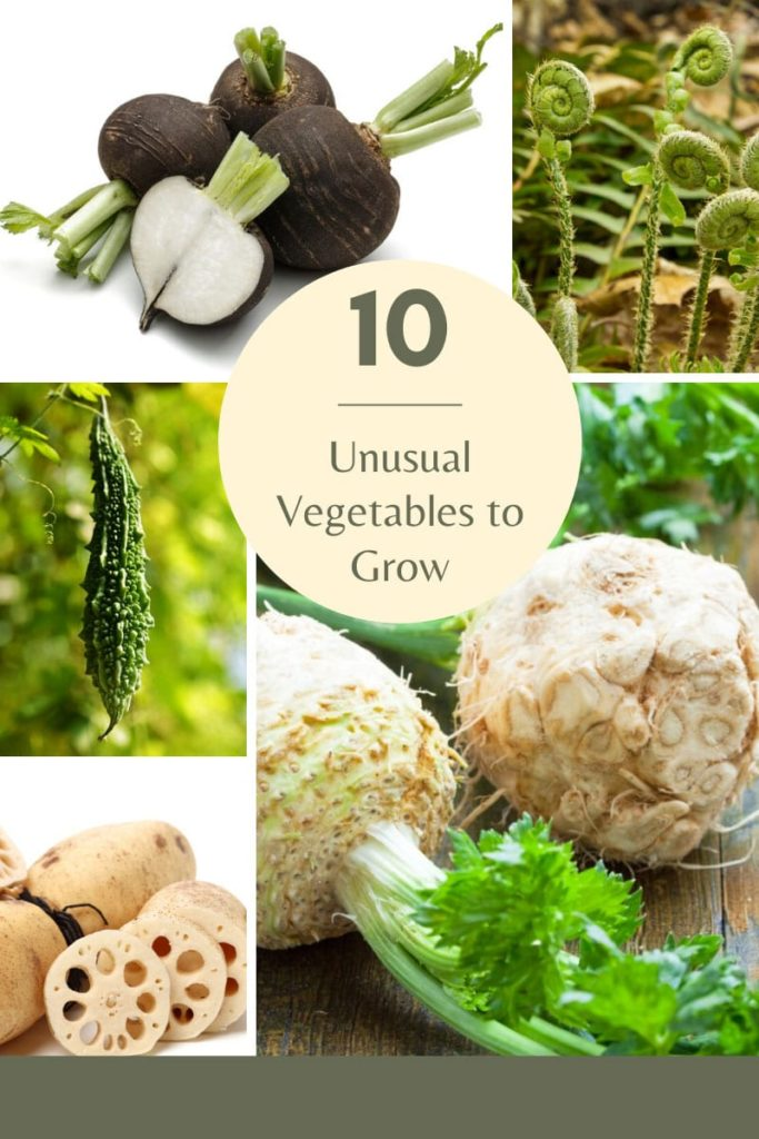 Unusual Vegetables To Grow And Eat