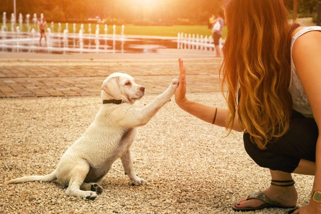 Appointing a Pet Sitter