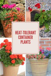 High Desert Container Gardening With Bright, Heat-Loving Annuals