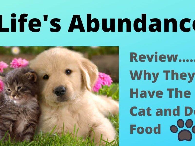 Life's Abundance Review