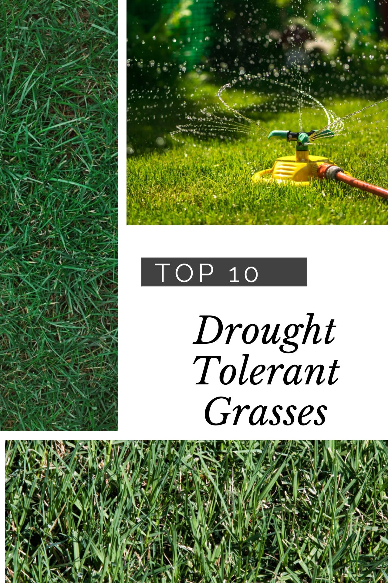 Types Of Lawn Grass – Top Choices For Arid Lawns