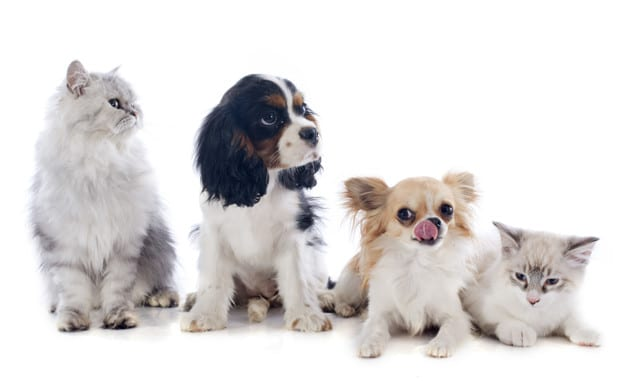 Global Pet Industry: Rapid Growth Rates Seen In World Pet Markets