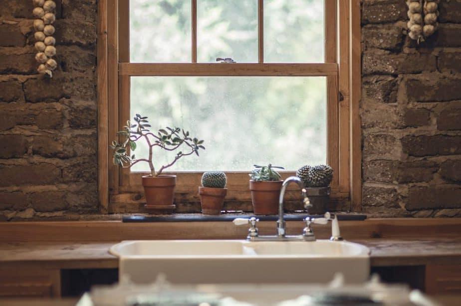 4 Succulents on Windowsill