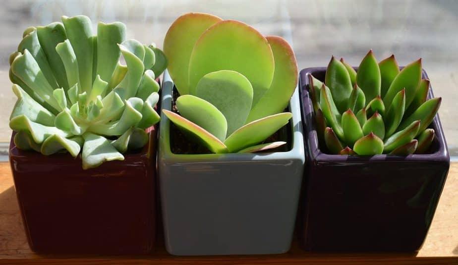 6 Succulent Plants