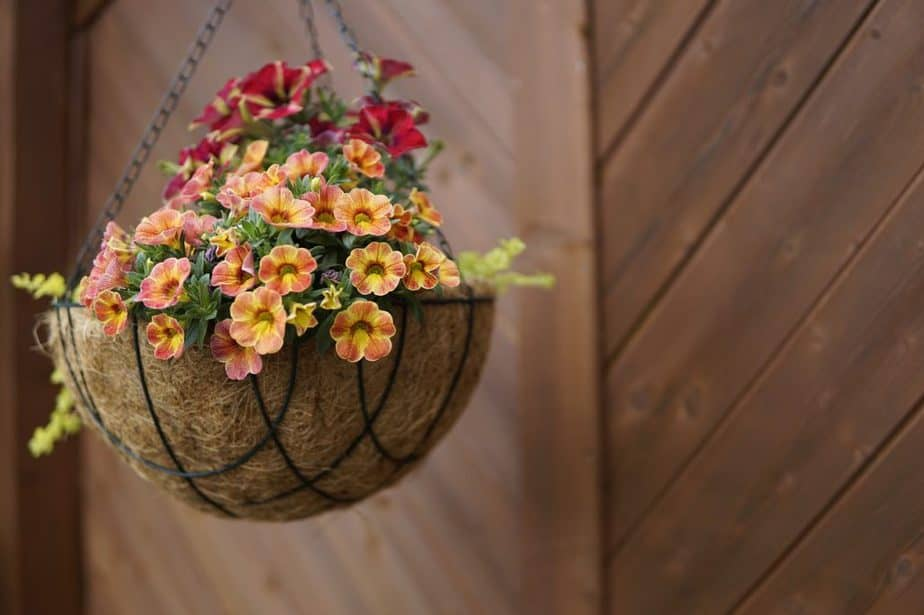 2 Hanging Basket with Sphagnum MOss