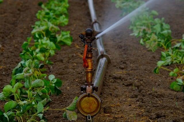 Sprinkler 2 Indoor or Outdoor