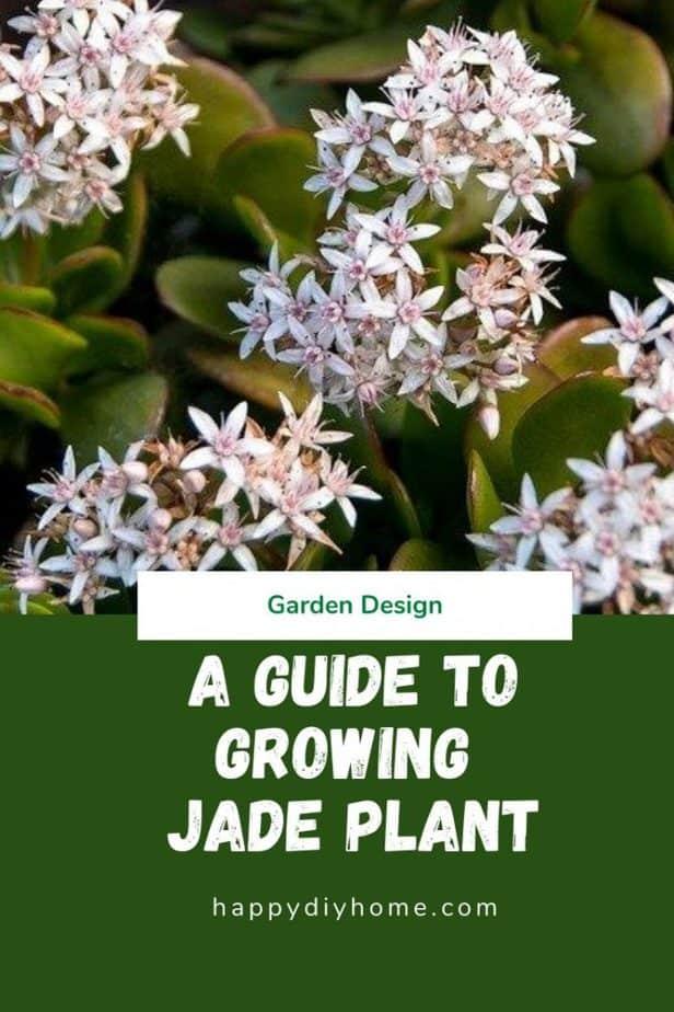 Jade Plant Canva 1