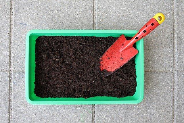 How to Grow Citronella Plant