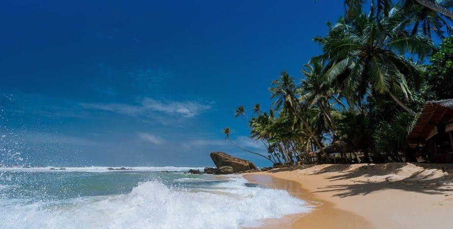 4 Coconut Trees Beach