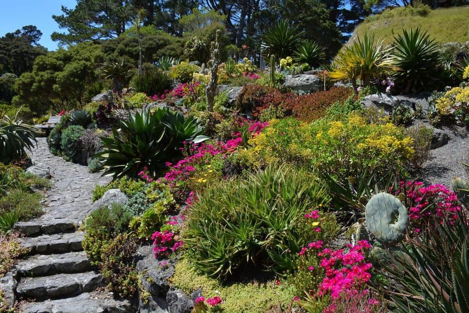 5. Example of well designed xeriscape ABOVE