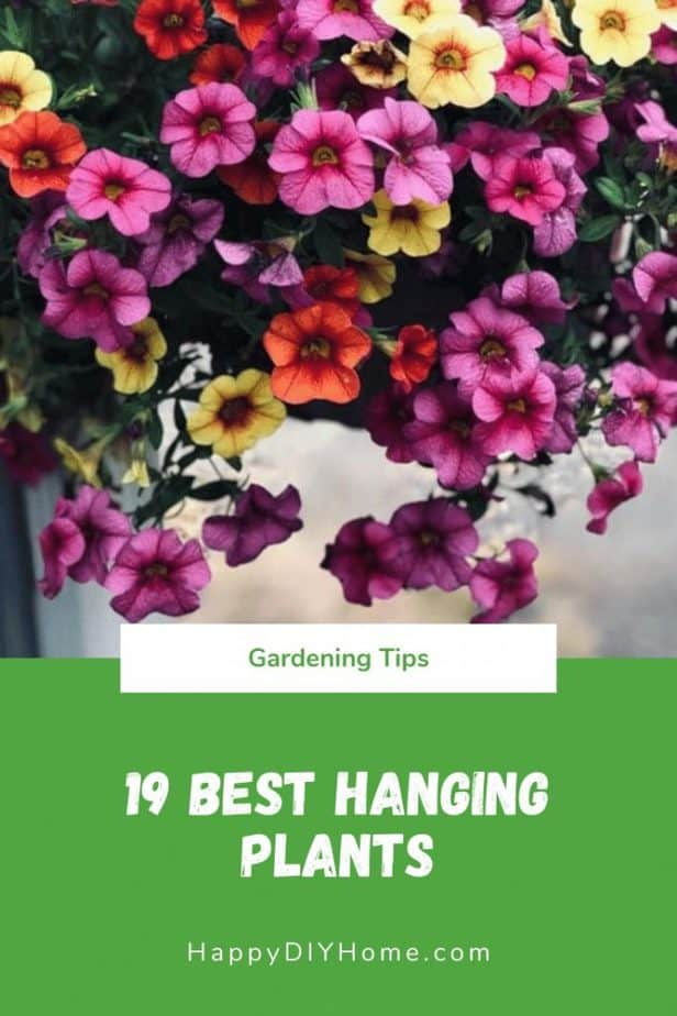 19 Best Hanging Plants