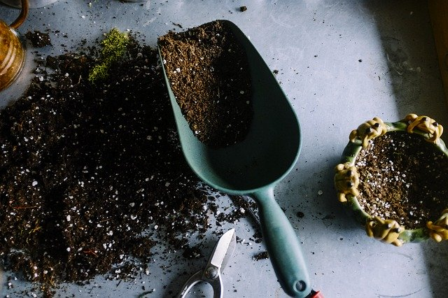 4 Fill containers with well draining compost