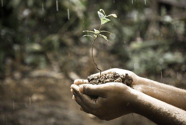 3 planting sapling of tree