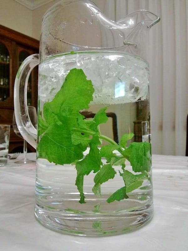 12 soak plant