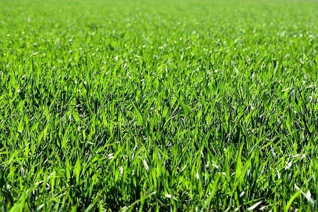 7 Grass