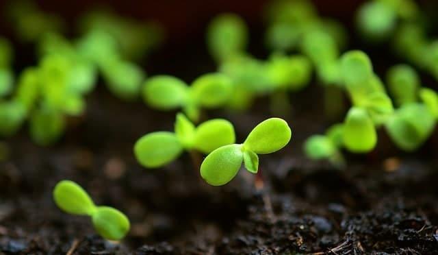 5 Seedlings